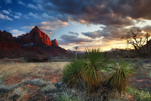 A-Fresh-Start_Zion-Utah-USA