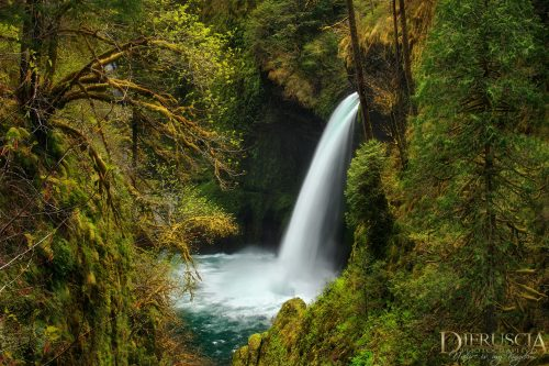 Fountain_of_youth-Oregon
