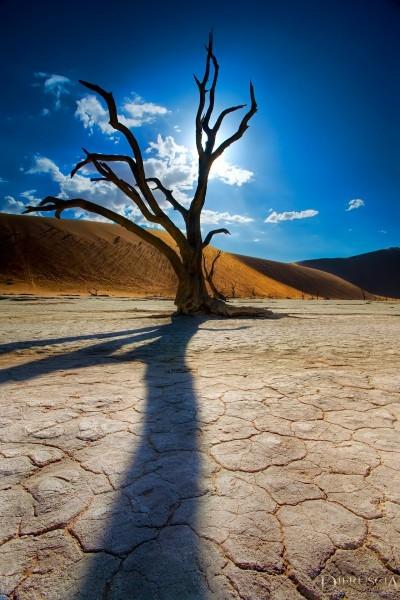 Lifeless_Shadow-Namibia_Africa