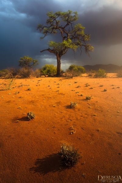 Nowhere_to_hide-Namibia_Africa