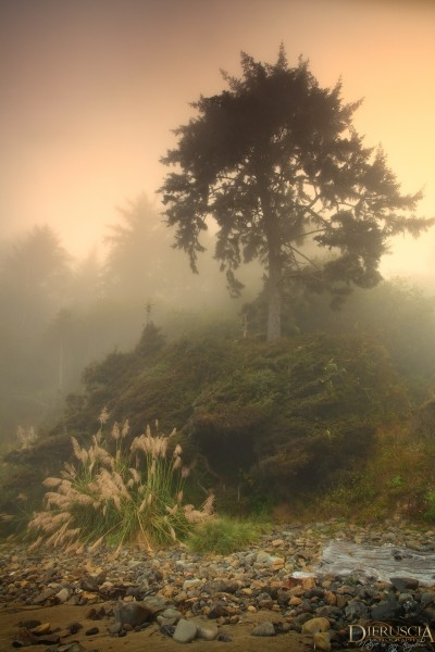 Hero-in-the-mist_California