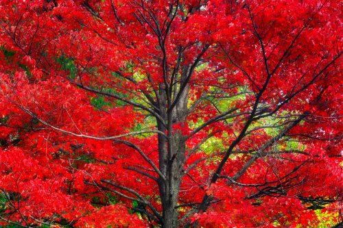 I-Saw-Red_St-Anne_Quebec2