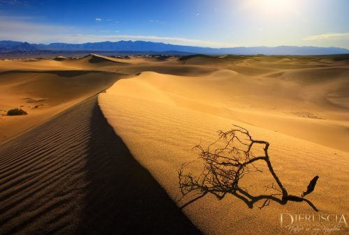 Remains-of-life_Death-Valley-California-USA