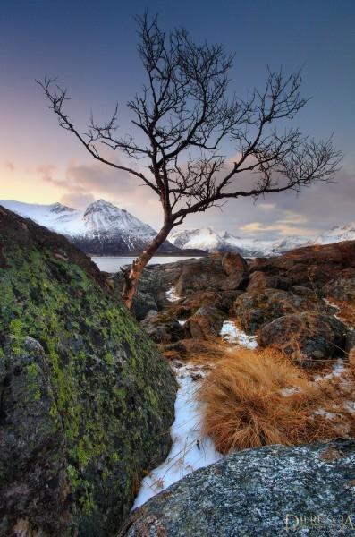Sacred-Land_Lofoten-Norway